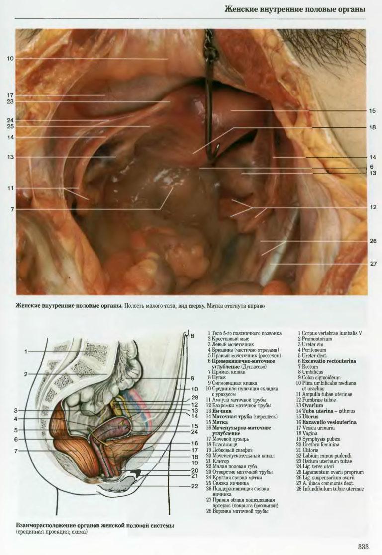 плацкартный вагон, фото внутренние половые органы женщины основными типами