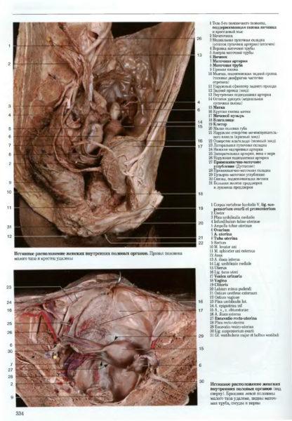 Женские внутренние половые органы